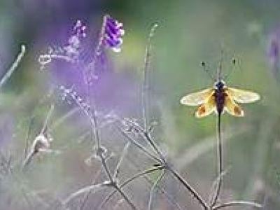 La vie, la nature, notre quotidien, tout, absolument tout ce qui nous entoure mérite notre admiration et doit nous faire apprécier la vie.
