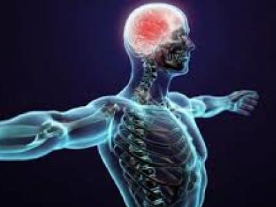 Le cerveau, le corps et l'esprit sont en synchronisation