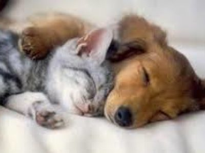 Les neurosciences découvrent pourquoi il est si important de bien dormir.