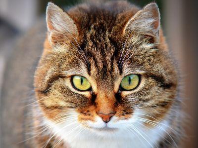 empathie des chats